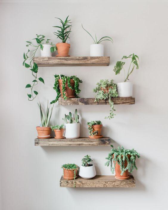 نباتات داخلية على الأرفف