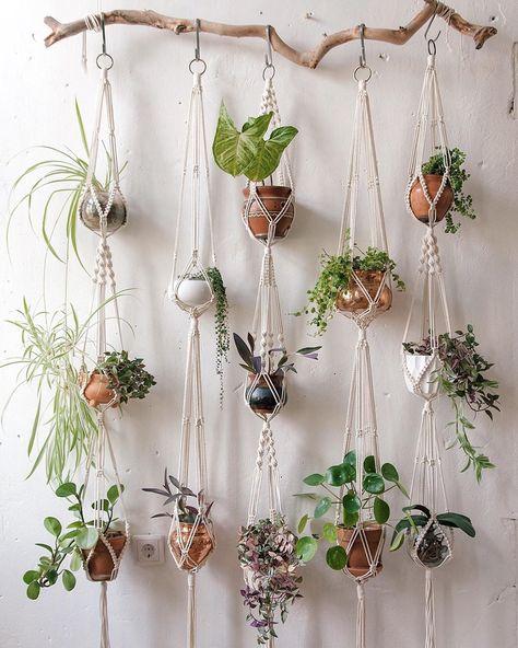 نباتات داخلية معلقة على غصن